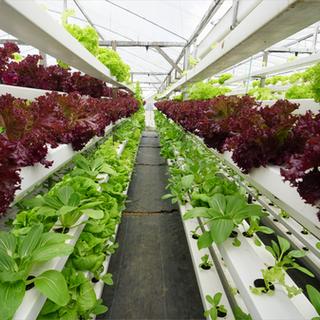 vertical farm.png