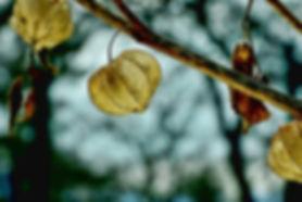 leaf-3197371_960_720.jpg