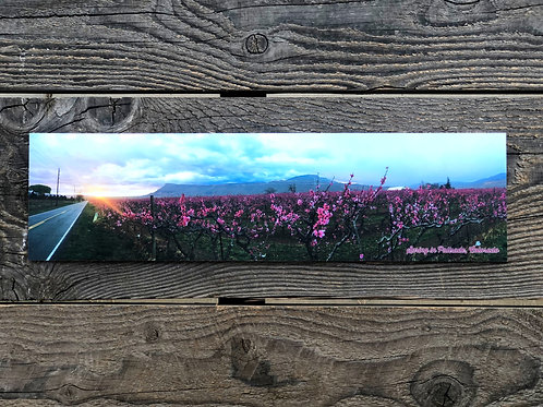 Gallery Mount Panoramic Photo on Canvas