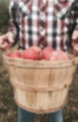 U-Pick Apples Palisade Colorado U-Pick Orchard