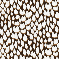 Marble Cone Shell-03