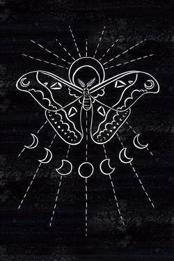 Atlas Moon Moth