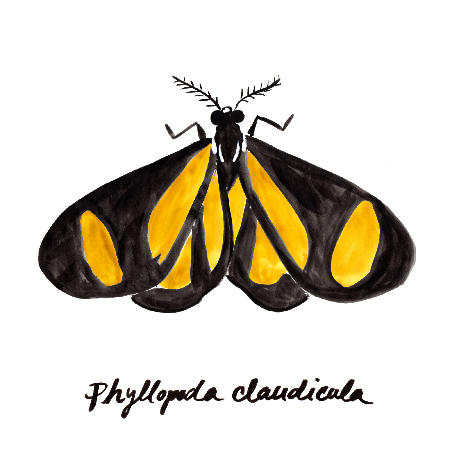 Day-flying Moths_with names_wht grnd-03.