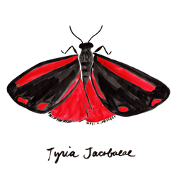 Day-flying Moths_with names_wht grnd-02.