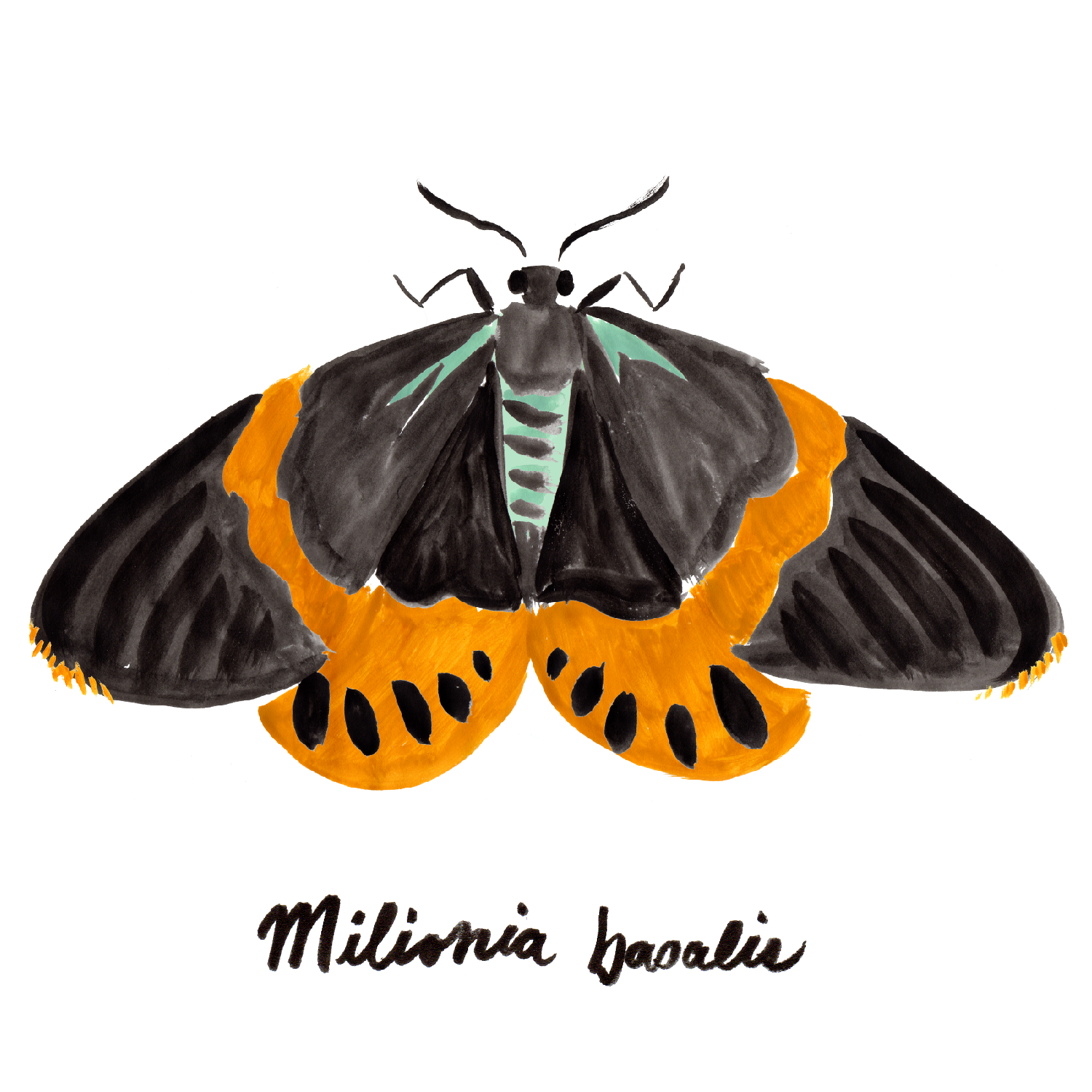 Day-flying Moths_with names_wht grnd-01.