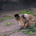 monkey-with-baby-741379_1280.jpg
