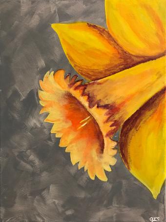 33 - Daffodil - Acrylic on Canvas - 2018 - 9x12