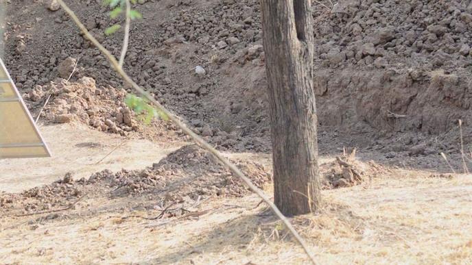 La imagen de un leopardo oculto enloquece a los internautas