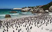 Boulders-Beach-Cape-Town-South1-Africa.j