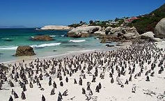 Boulders-Beach-Cape-Town-South1-Africa.j