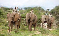 elephantencounter1.jpg