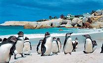 Boulders-Beach-Cape-Town-South-Africa.jp