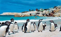 Boulders-Beach-Cape-Town-South-Africa.jp