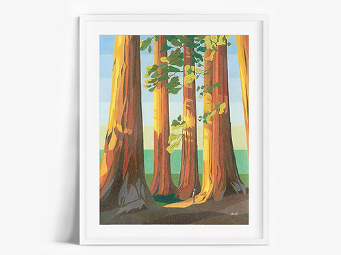 Sequoia Trees - Limited Edition Print