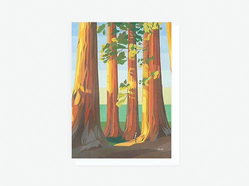 Sequoia Trees - Greeting Card