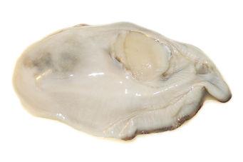 Oyster-Raw-Specimen-2.jpg