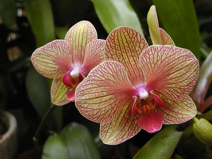 ASH - Orchids 1.JPG