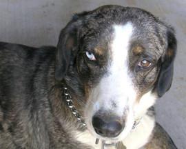 Kahua Ranch Dog