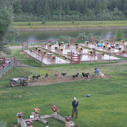 Sled Dog Demonstration from Riverboat