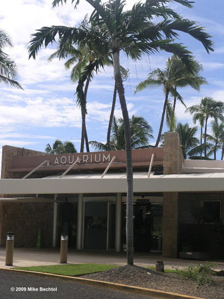 Waikiki Aquarium