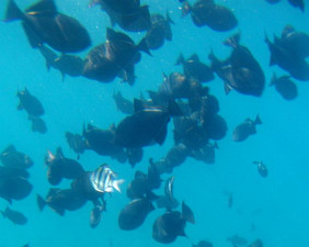 From Reefdancer Glass Bottomed Boat