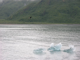 Glacier Ice and Bald Eagle