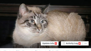 Why My CAT Has a Facebook Page