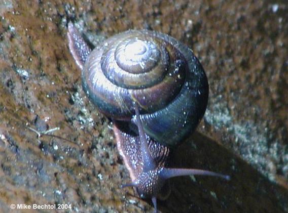 Snail at Prehistoric Gardens