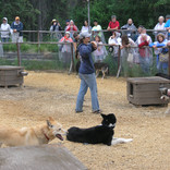Sled Dog Demonstration