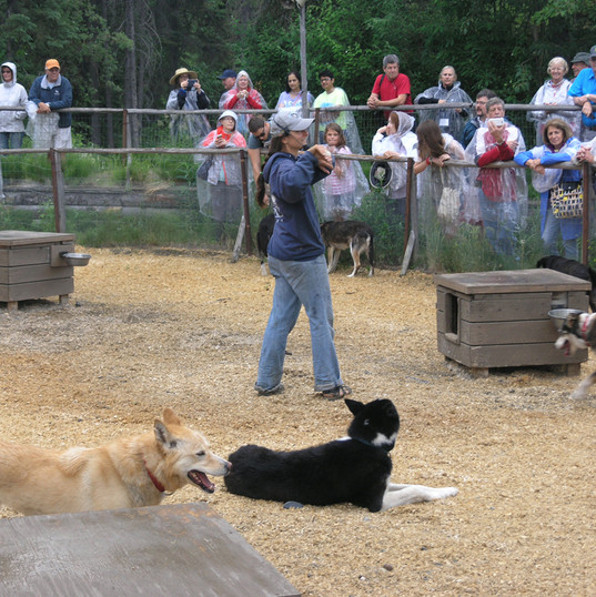 Sled Dog Demonstration