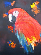 Macaw parrot..aren't I beautiful?