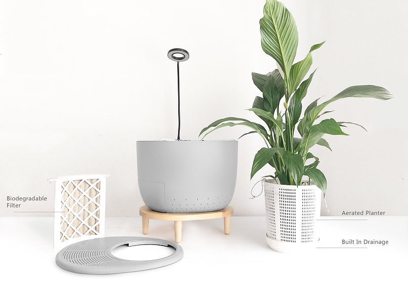air purifier+plant.jpg