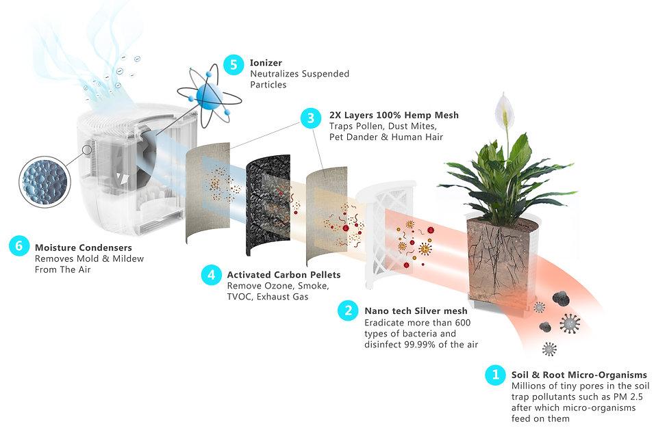 Stages of filtration.jpg