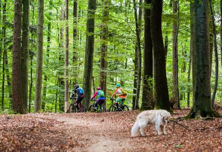 Mountainbiken im Odenwald