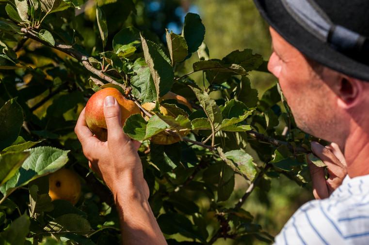 Odenwälder Unterholz Apfellikör