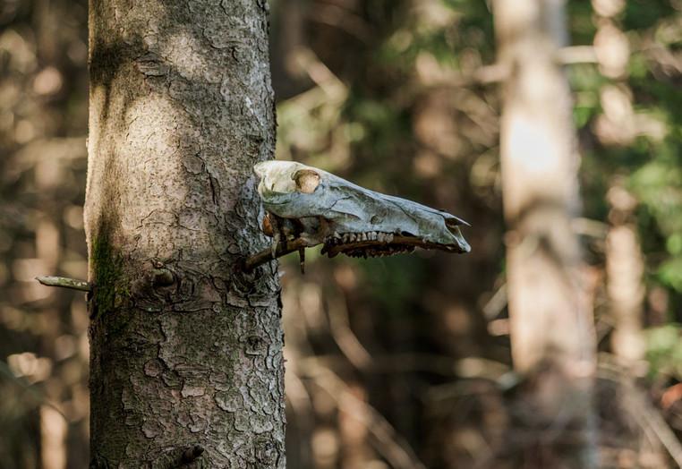 Skelett an einem Baum