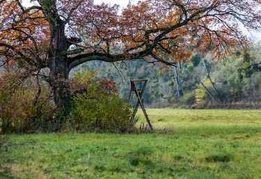Naturpark Kühkopf-Knoblochsaue, Stockstadt am Rhein