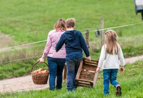 Familie Pfeiffer bei der Apfelernte