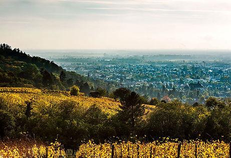 Weinanbau-hessische-bergstrasse