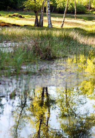 Rotes Wasser, Olfener Moor