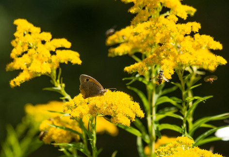 Wunderschöne Faura und Flora und viele Natureindrücke gibt es in dem herrlichen Naturschutzgebiet.