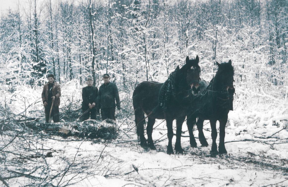 Götzingen – Holzrücken