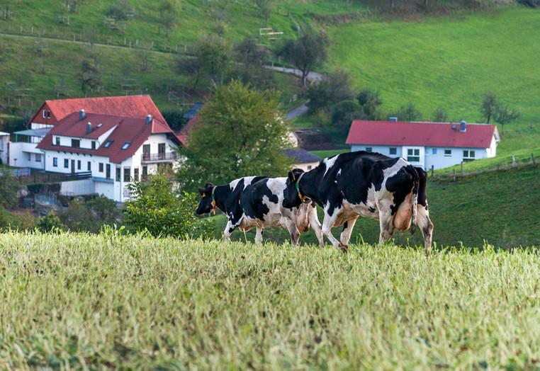 Natur und Landwirtschaft im Ostertal