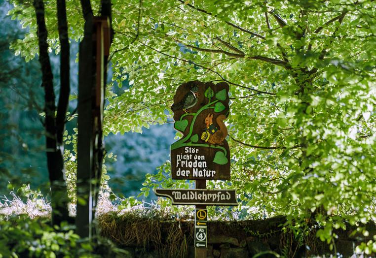 Geopark-Wanderung und Führung durch den ersten deutschen Waldlehrpfad