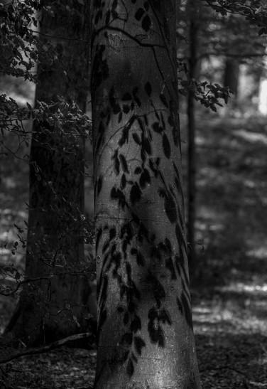 Blätter zeichnen sich als Schatten auf den Baum.