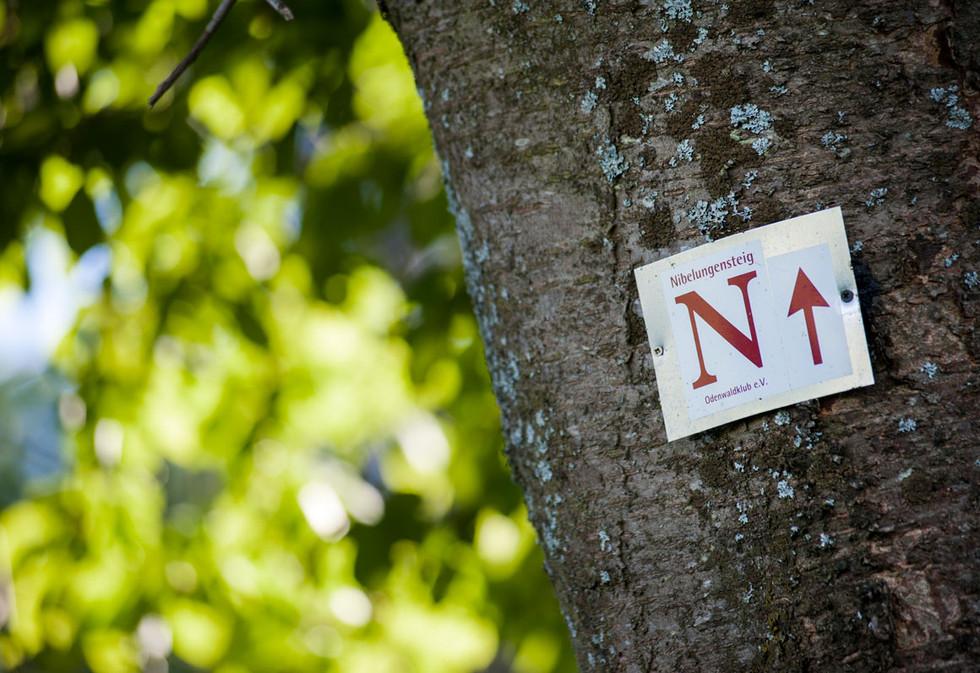 Nibelungensteig im Odenwald