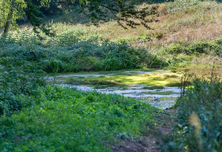Wunderschöne Faura und Flora und viele herrliche Natureindrücke gibt es in dem herrlichen Naturschutzgebiet