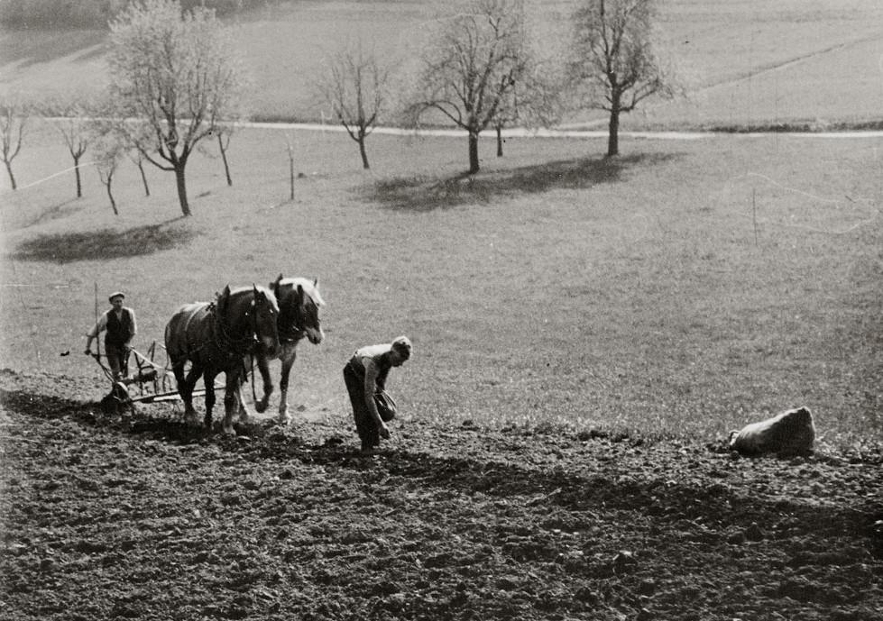 Landwirtschaft im Odenwald anno dazumal