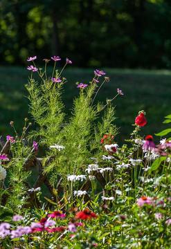 Flowerpower Garten von Mani Neumeier und Etsuko