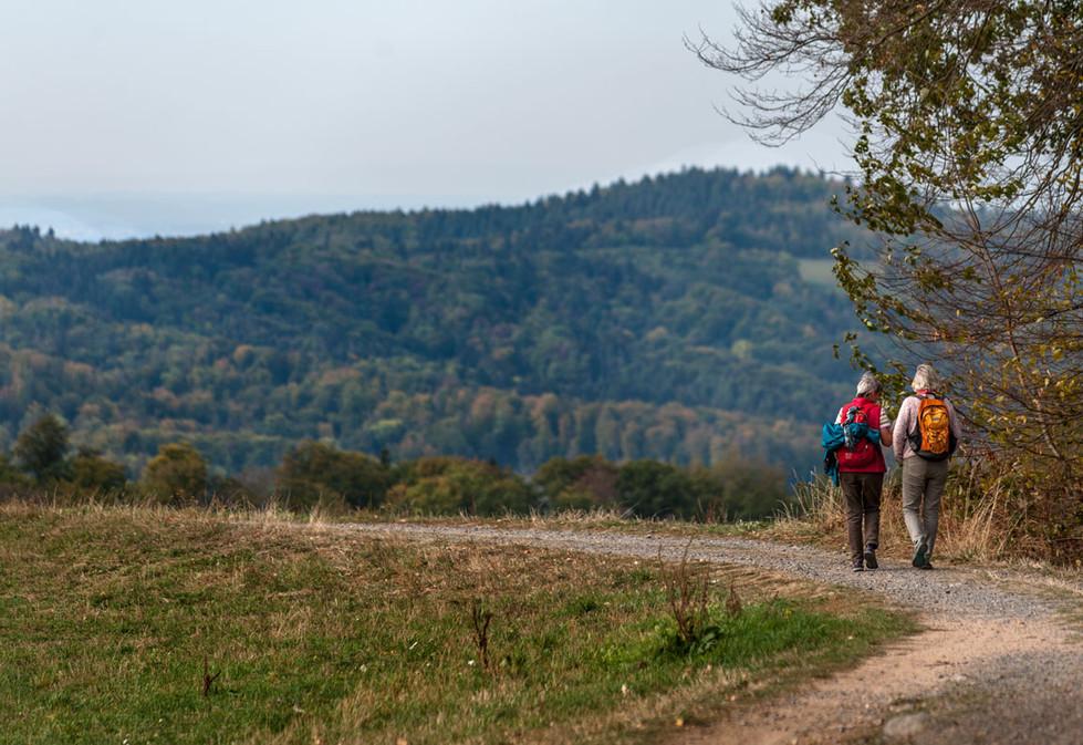 Weinwanderung im Odenwald